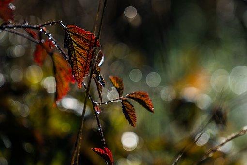 Nature, Landscape, Leaf, Autumn, Backlighting