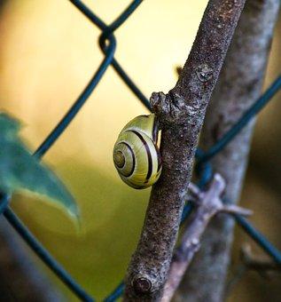 Snail, Shell, Macro, Close Up, Nature, Slowly, Mollusk