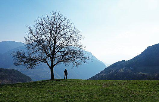 Landscape, Tree, Man, Nature, Outdoors, Forest, Scenic