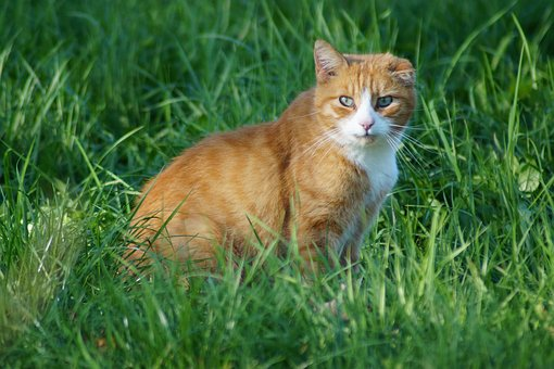 Cat, Animal, Meadow, Pet, Animal World, View