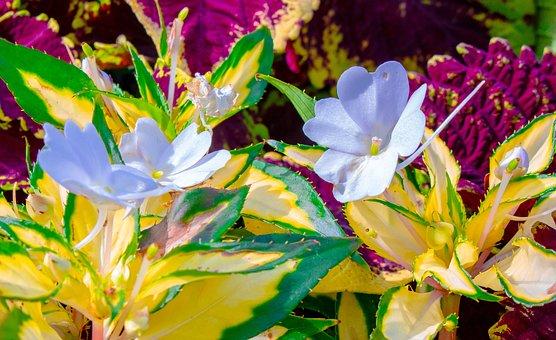 Plant, Nature, Bloom, Blossom, Garden, Spring, Flora