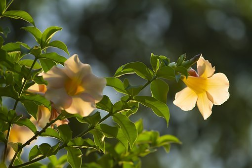 Nature, Beautiful, Plant, Background, Beauty, Garden
