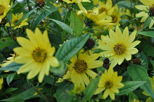 Yellow Flower, Summer, Yellow, Nature, Bloom, Flower