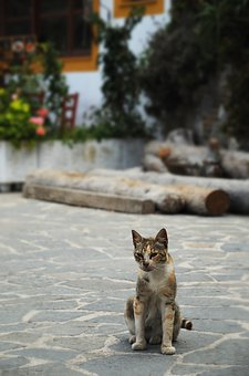 Cat, Kitten, Animal, Street, Olympos, Karpathos, Greece