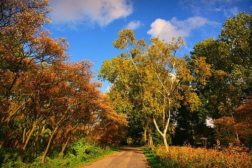Tree, Road, Park, Autumn Colors, Outdoors, Mood, Bright
