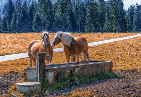 Pertisau, Tyrol, Gramai, Horses, Meadow, Pasture