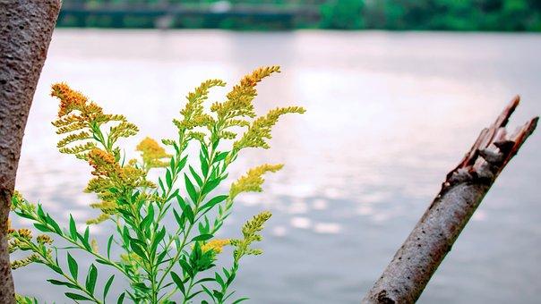 Plant, Flower, Bloom, Nature, Blossom, Garden, Spring