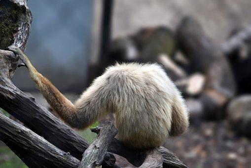 Monkey, Mammal, Zoo, Animals, Africa, Primates