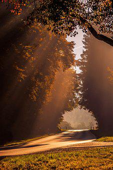 Autumn, Sunbeam, Road, Backlighting, Sun
