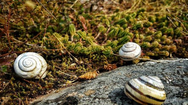 Nature, Snail, Shell, Rock, Mollusk, Spiral
