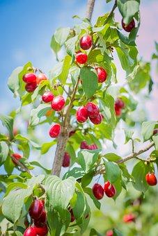 Tree, Branch, Summer
