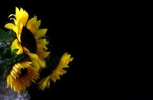 Sunflower, Autumn, Late Summer, Nature, Blossom, Bloom