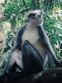 Monkey, Indonesia, Sumatera, Tourism, Exotic, Animal