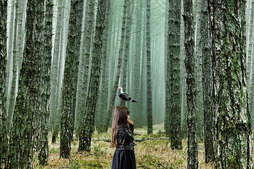 Forest, Girl, Gull, Bird, Fairytale, Nature, Trees