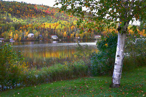 Landscape, Fall, Nature, Trees, Birch, Forest, Leaves