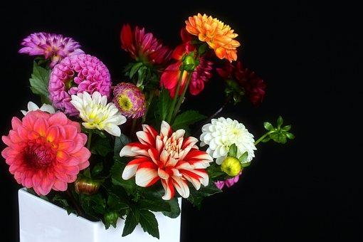 Dahlias, Vase, Bouquet, Garden, Autumn Flower, Blossom