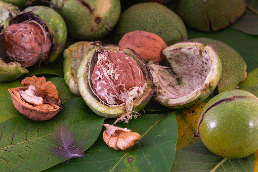 Walnut, Nut, Shell, Leaves, Delicious, Healthy