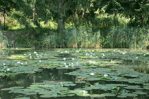 Waterlilies, Lake, South Tyrol
