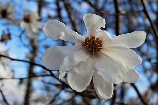 White, Flower, Tree, Bloom, Spring, Nature, Color, Sky