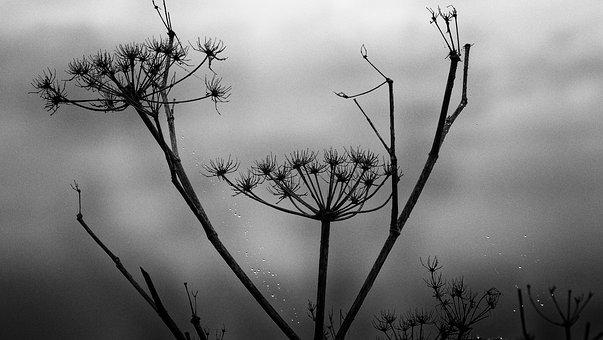 Black And White, Mood, Winter, Dead, Plant, Atmosphere