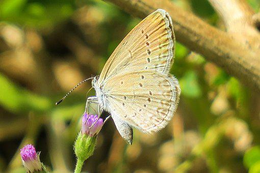 Butterfly, Natural, Summer, Beautiful, Close-up, Yellow