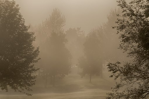 Fog, Trees, Autumn, Dark, Forest, Nature, Landscape