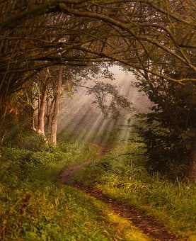 Nature, Away, Landscape, Sunbeam, Lane, Trail