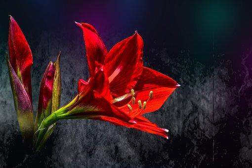 Flower Beautiful, Beautiful Gradiola, Nature