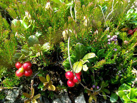 Berry, Under The Forest, Flowers, Nature, Ecology