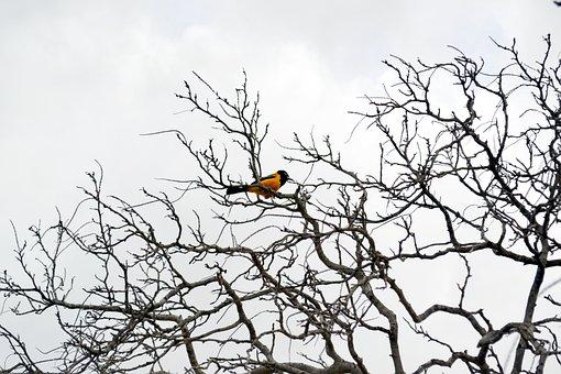 Summer, Caribbean, Aruba, Yellow Bird
