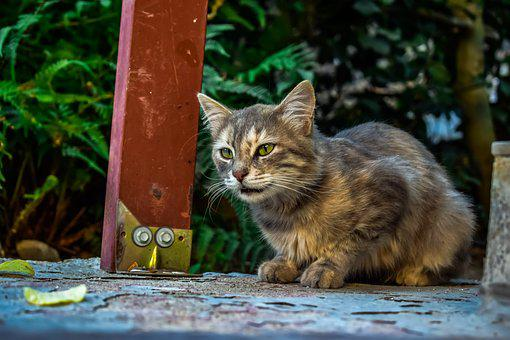 Cat, Stray, Animal, Cute, Nature, Mammal, Looking