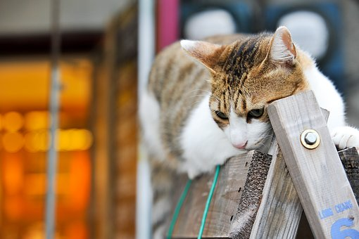 Cat, Taiwan, Cuteness, In The Afternoon, Landscape