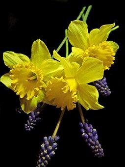 Daffodils, Hyacinths, Flowers, Garden, Nature