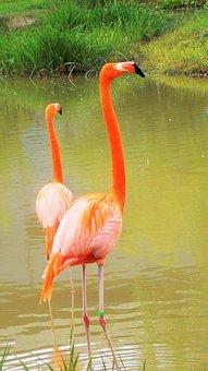 New, Flamingo, Animal