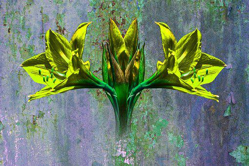 Flower Grunge, Art, Nature, Vintage