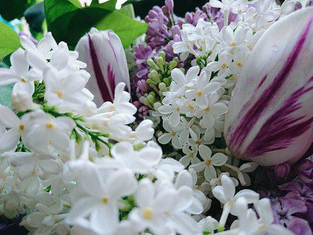 Lilac, Flowers, Spring, Bouquet, Tulip