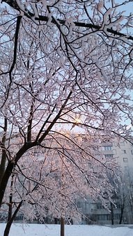 Winter, In Winter, Tree, Leann, Snow, Cold, Nature