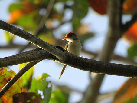 Bird, Wildlife, Animal, Fly, Kingfisher, Lake