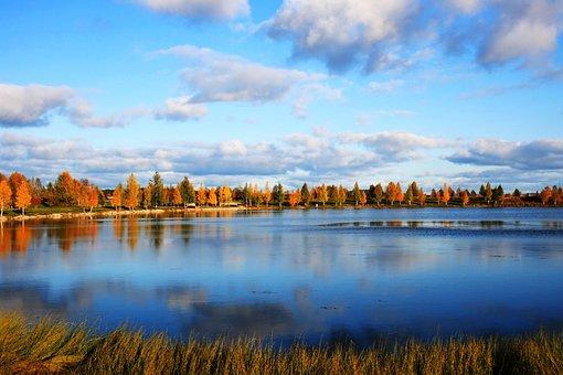 Nature, Landscape, Water, Pond, Autumn, Birch Trees