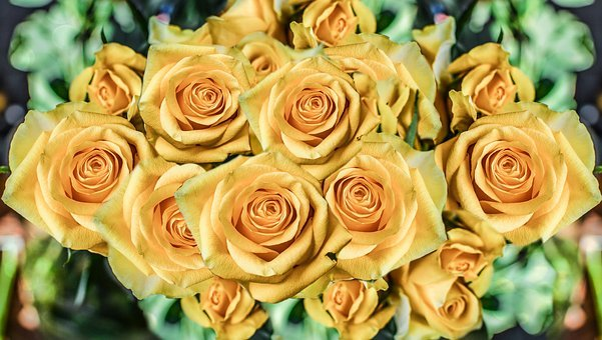 Roses, Flowers, Petal, Love, Romance, Anniversary, Gift