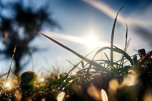 Grass, Blade Of Grass, Dew, Morgentau, Drip, Sun