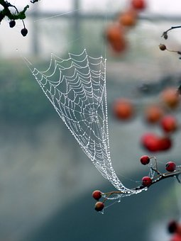 Canvas, Spider, Beads, Dew, Nature, Autumn, Morning