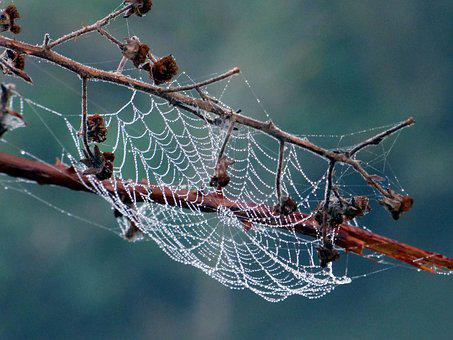Branches, Nature, Beads, Dew, Morning, Spider, Tree