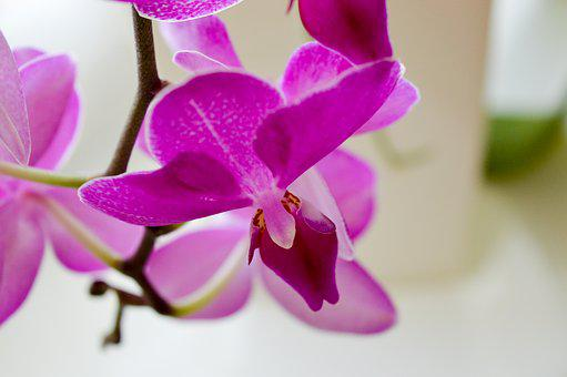 Flower, Flowers, Plant, Orchid, Pollen, Orchids, Orchis