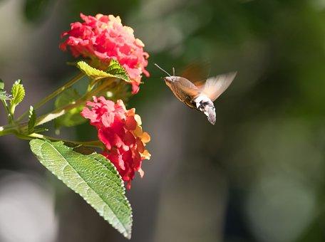 Blossom, Bloom, Plant, Ornamental Plant, Flower, Park