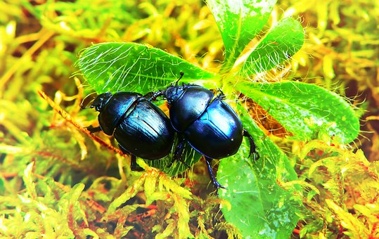 Beetles Forest, Insects, Plant, Leaf, Moss, Animals