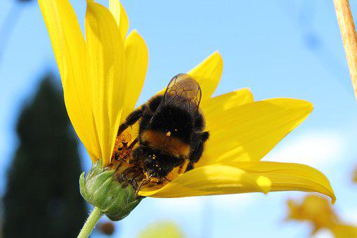 Yellow, Insect, Flowers, Plant, Garden, Pollen, Bees