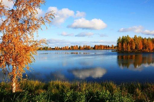 Landscape, Birch Trees, Pond, Autumn, Water, Colors