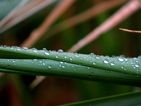 Water, Drop, Drops, Reflection, Drip, Wet, Nature