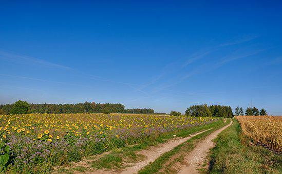Road, Lane, Away, Landscape, Field Of Sun Flowers, Bees
